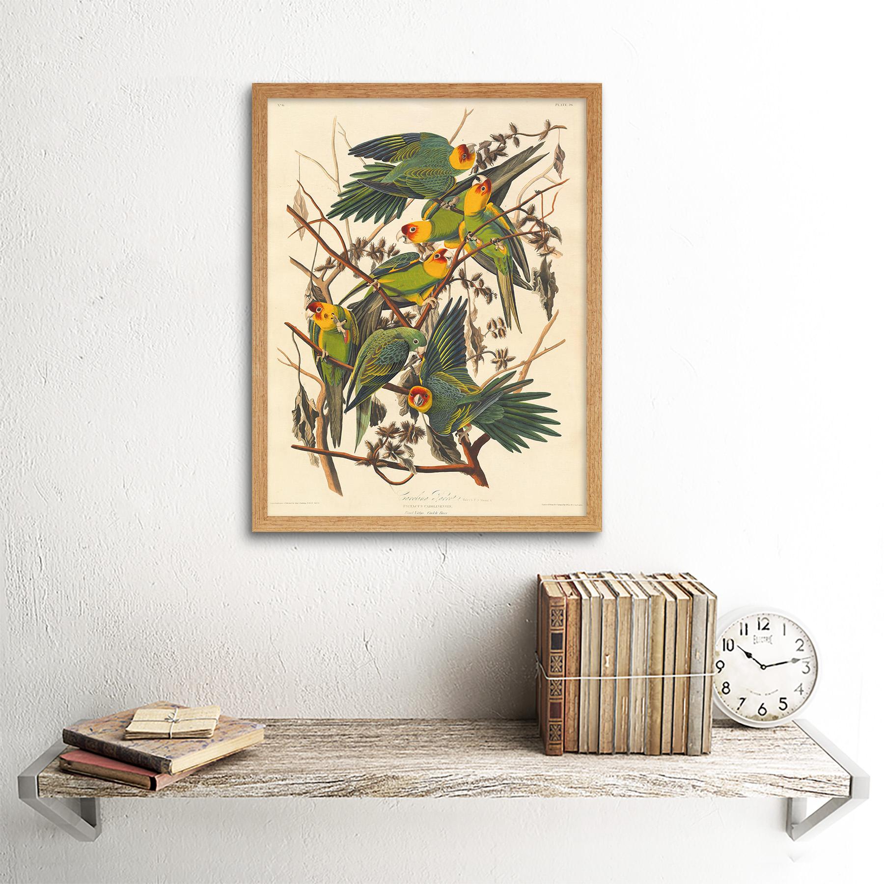 Havell Audubon American Carolina Loro Zoología 12X16 pulgadas impresión arte enmarcado