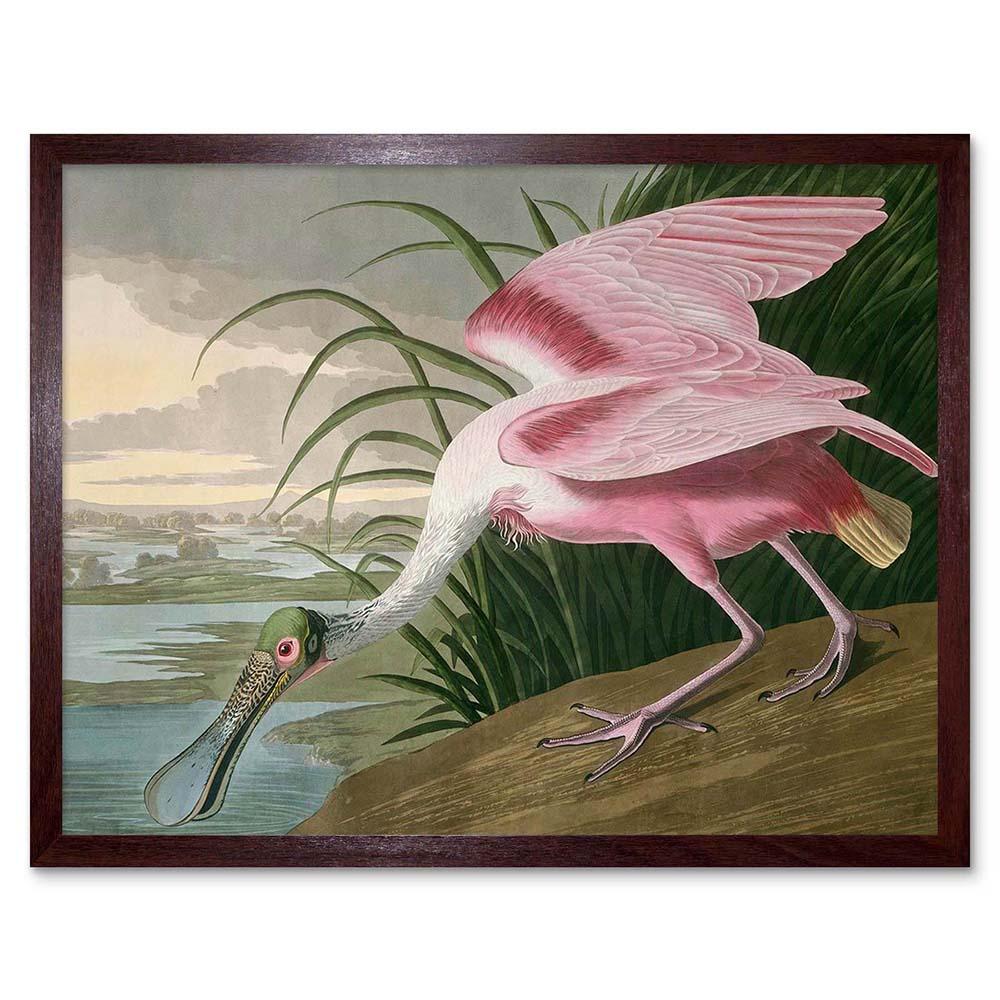 American Platalea ajaja Zoología Havell Audubon 12X16 pulgadas impresión arte enmarcado