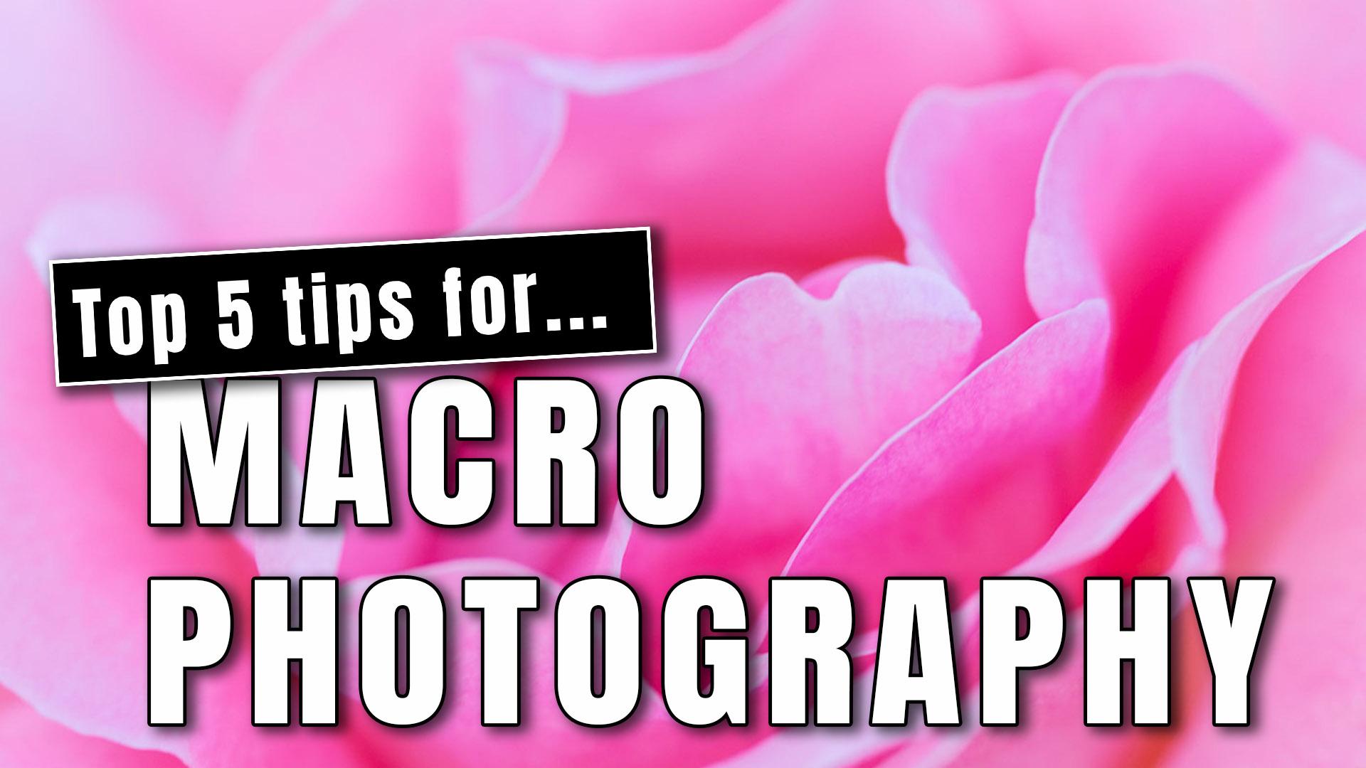 BLOG 5 JUL 2020: Top 5 tips for Macro Photography