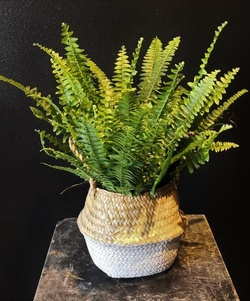 Plants, gifts, flowers, wreaths and more!