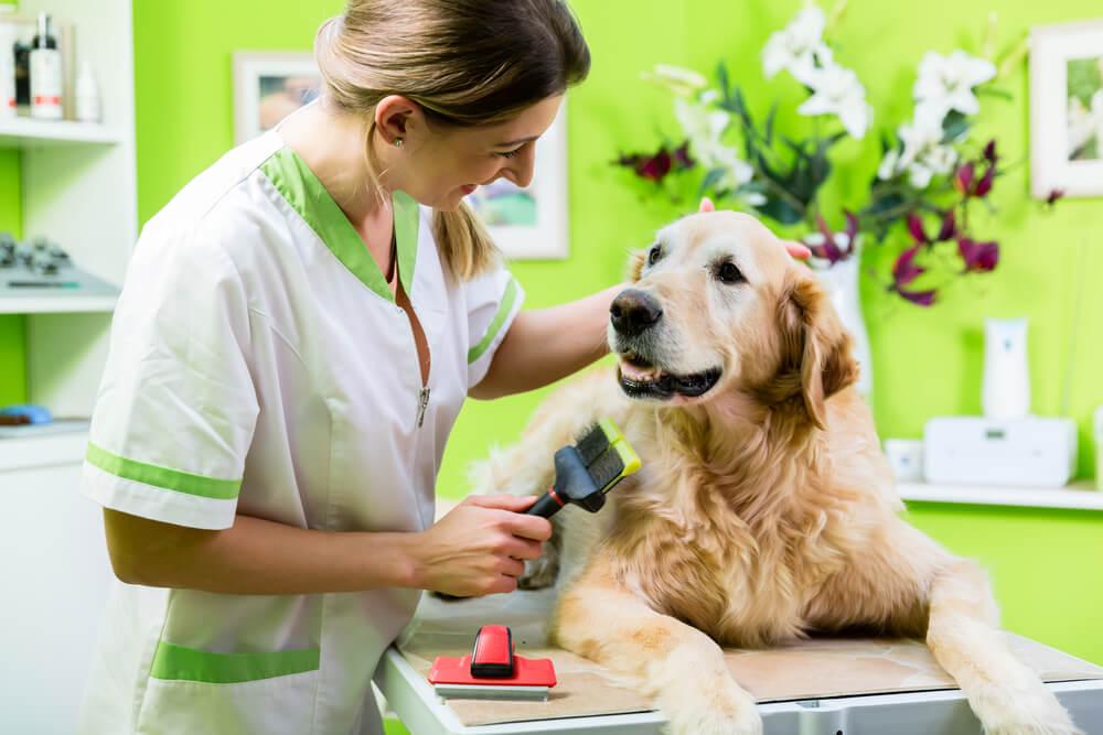 Dog Grooming Level 3