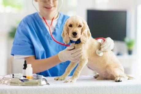 Pet Care Level 3