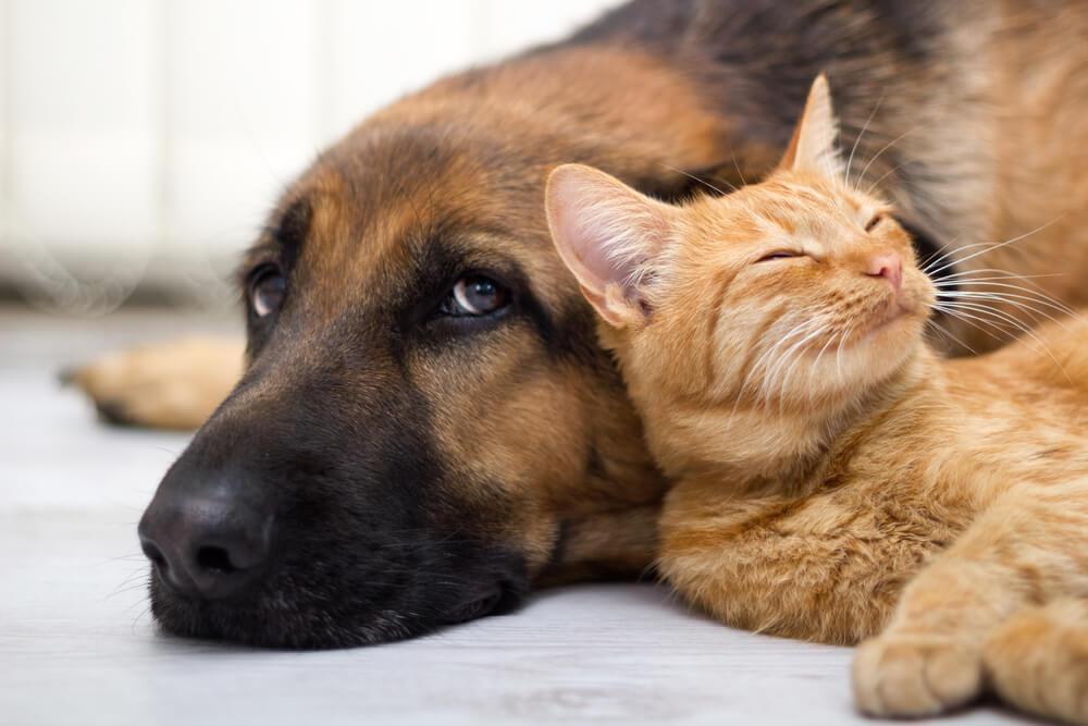 Animal Welfare Level 3