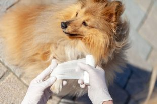 Animal First Aid Level 3
