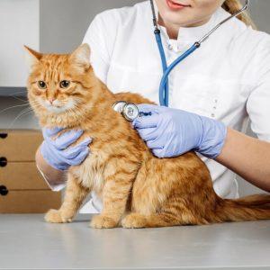 Animal Health Care Level 3