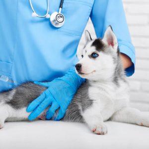 Certificate in Animal Diseases at QLS Level 3
