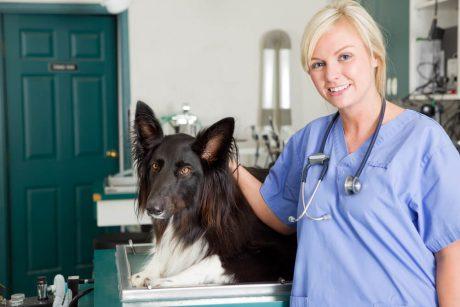 Certificate in Veterinary Nurse Training at QLS Level 3