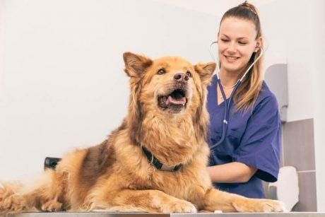 Certificate in Pet Care at QLS Level 3