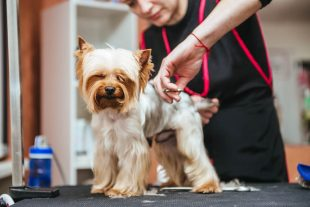 Certificate in Dog Grooming at QLS Level 3
