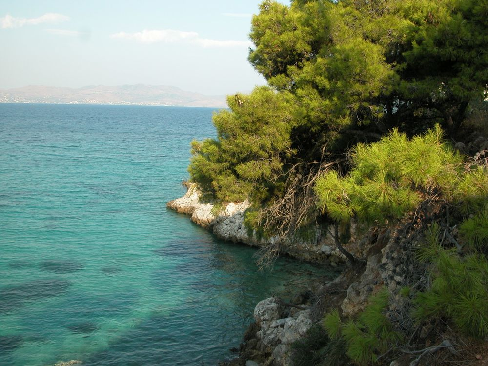 Pine tree on rocky aegian coast Agistri
