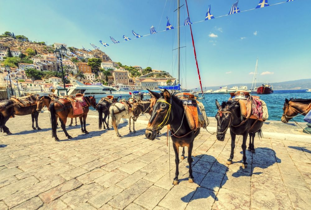 Hydra donkeys on island