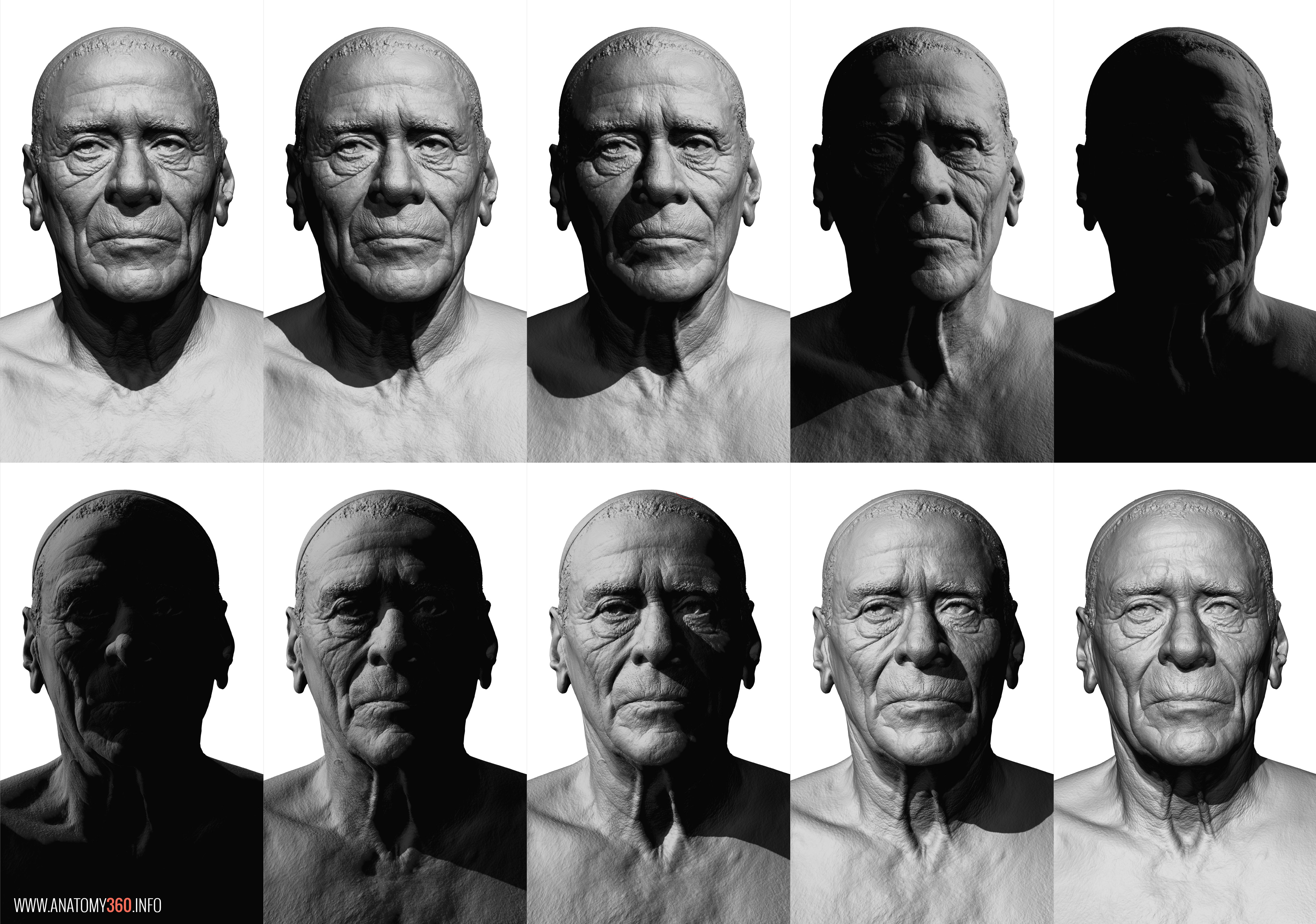 head and face reference anatomy 360