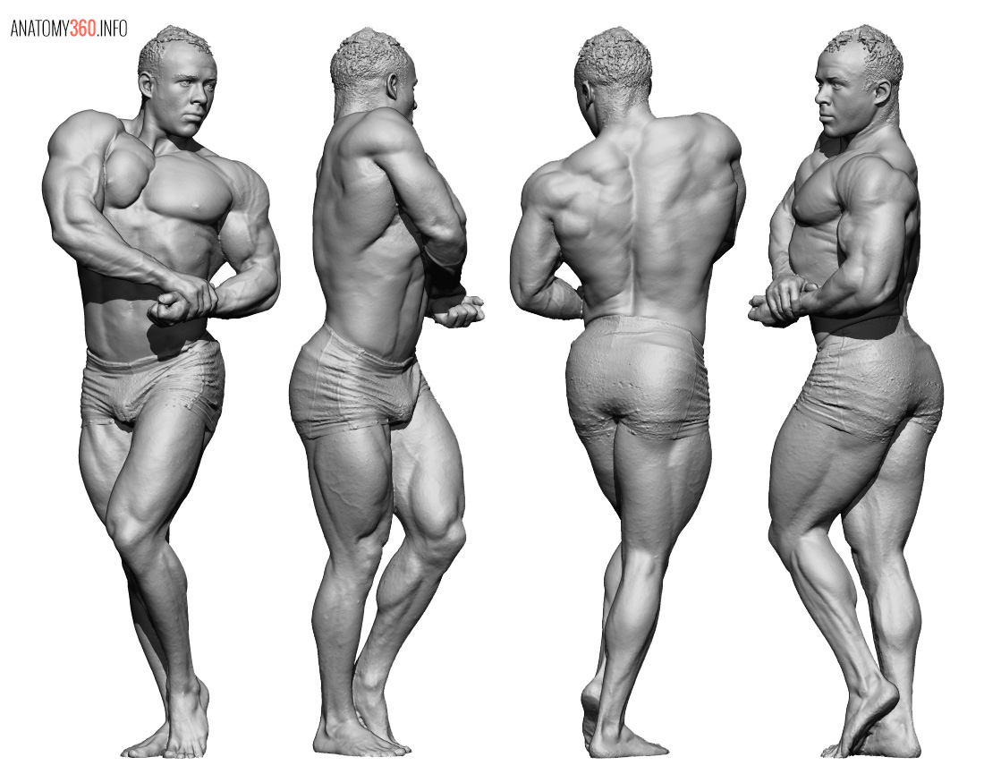 Male Body Reference - Anatomy 360