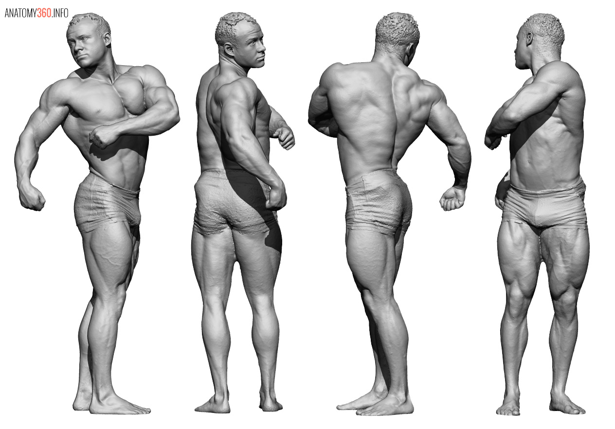 Male Body Reference Anatomy 360