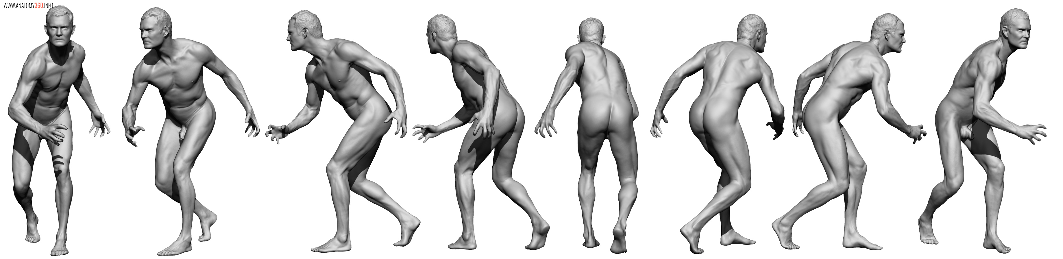 AnatomyReference_011