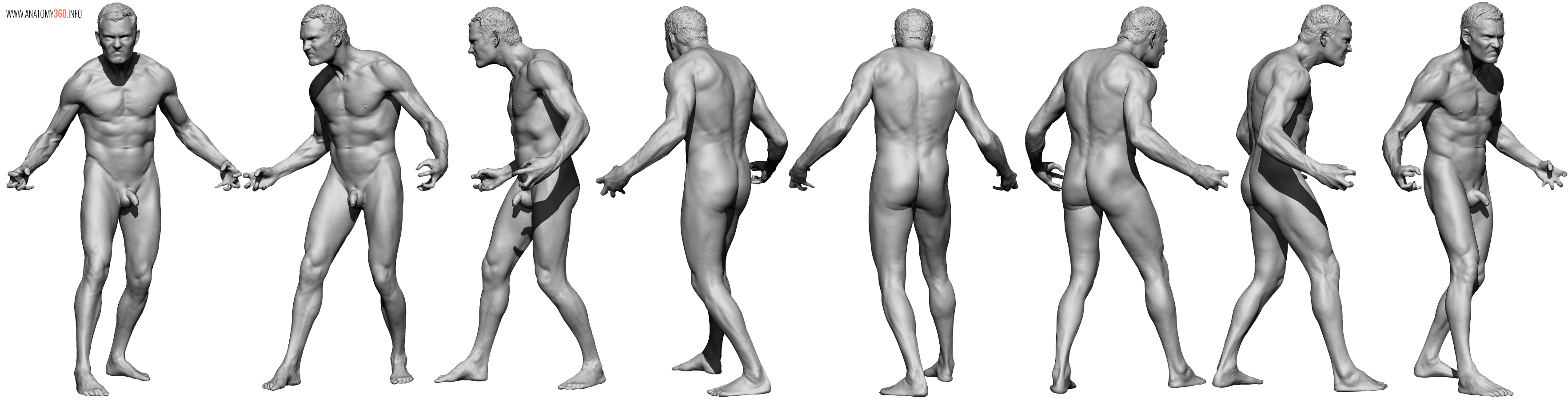 AnatomyReference_02