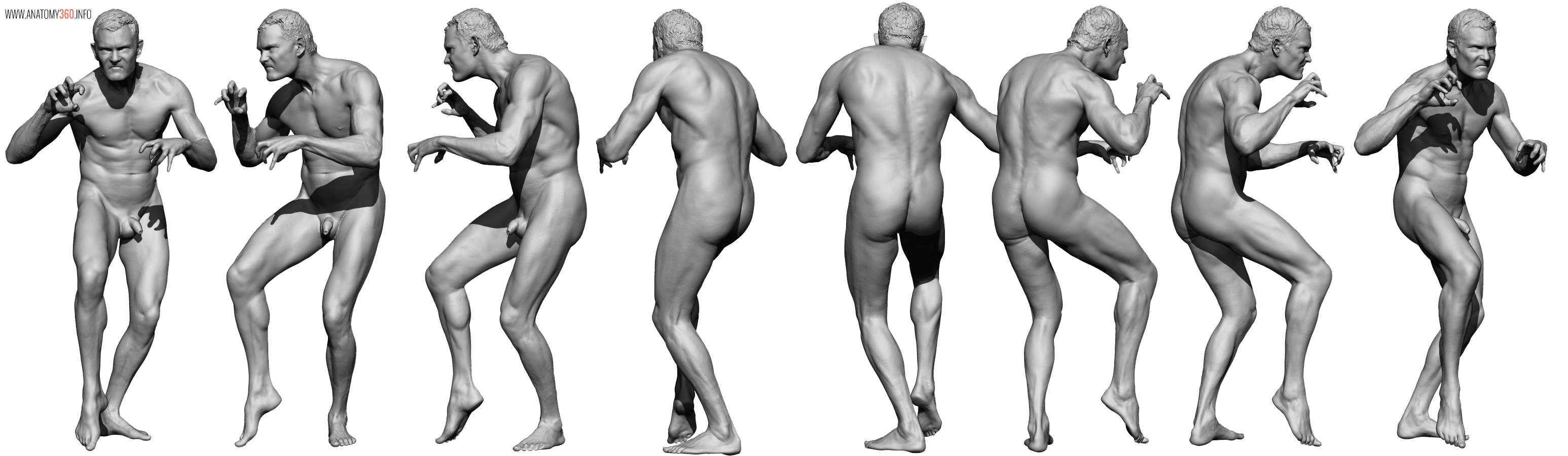 AnatomyReference_03