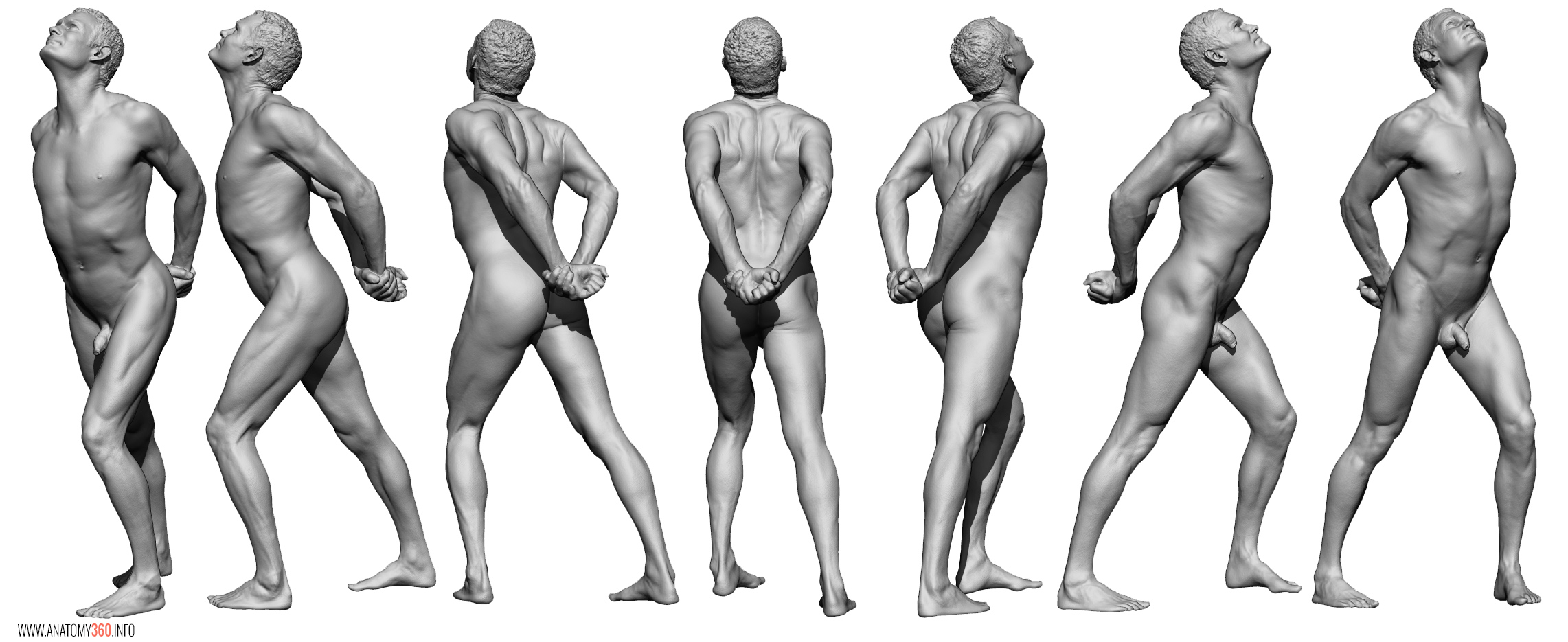AnatomyReference_04
