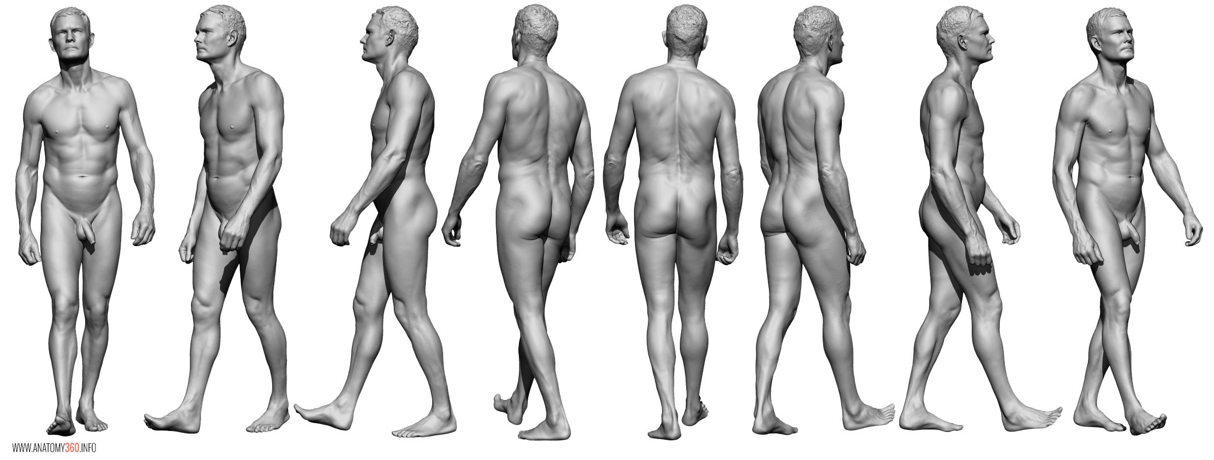 AnatomyReference_05