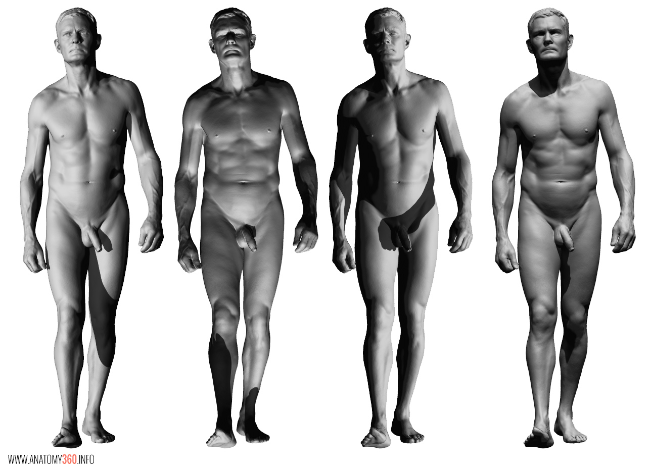 AnatomyReference_06