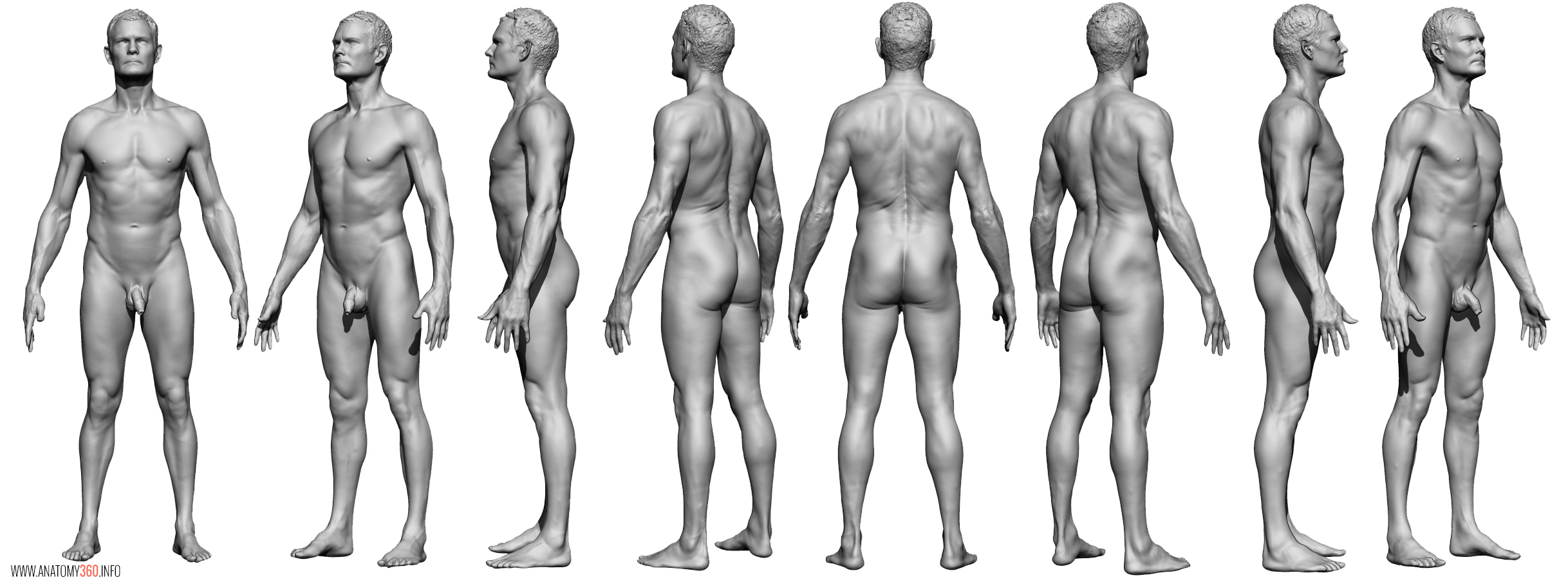 AnatomyReference_07