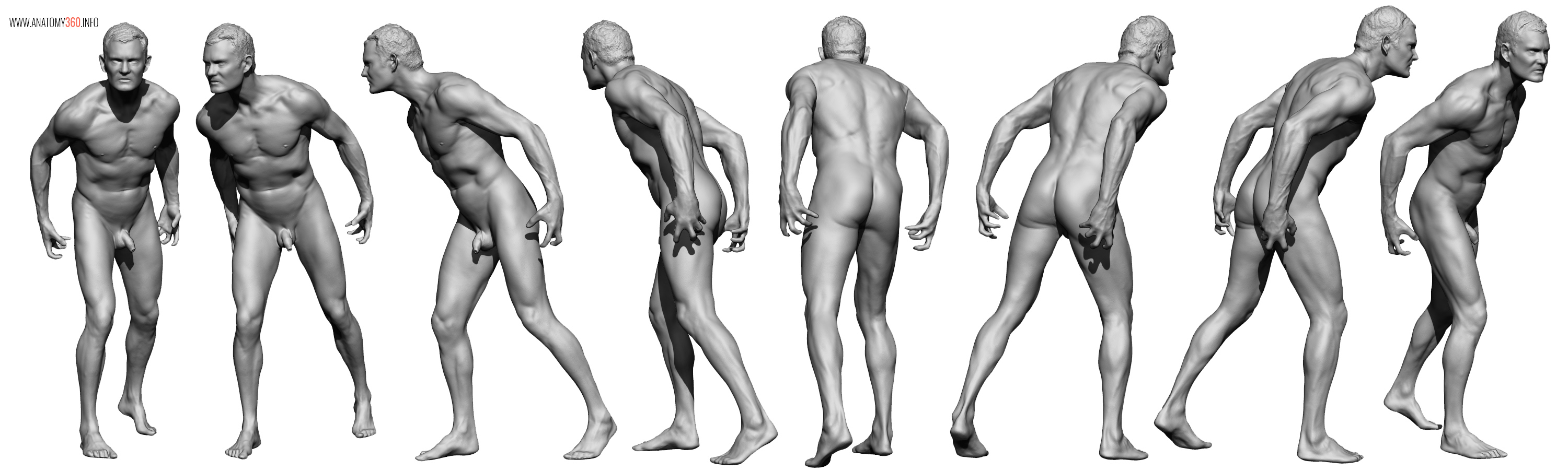 AnatomyReference_09
