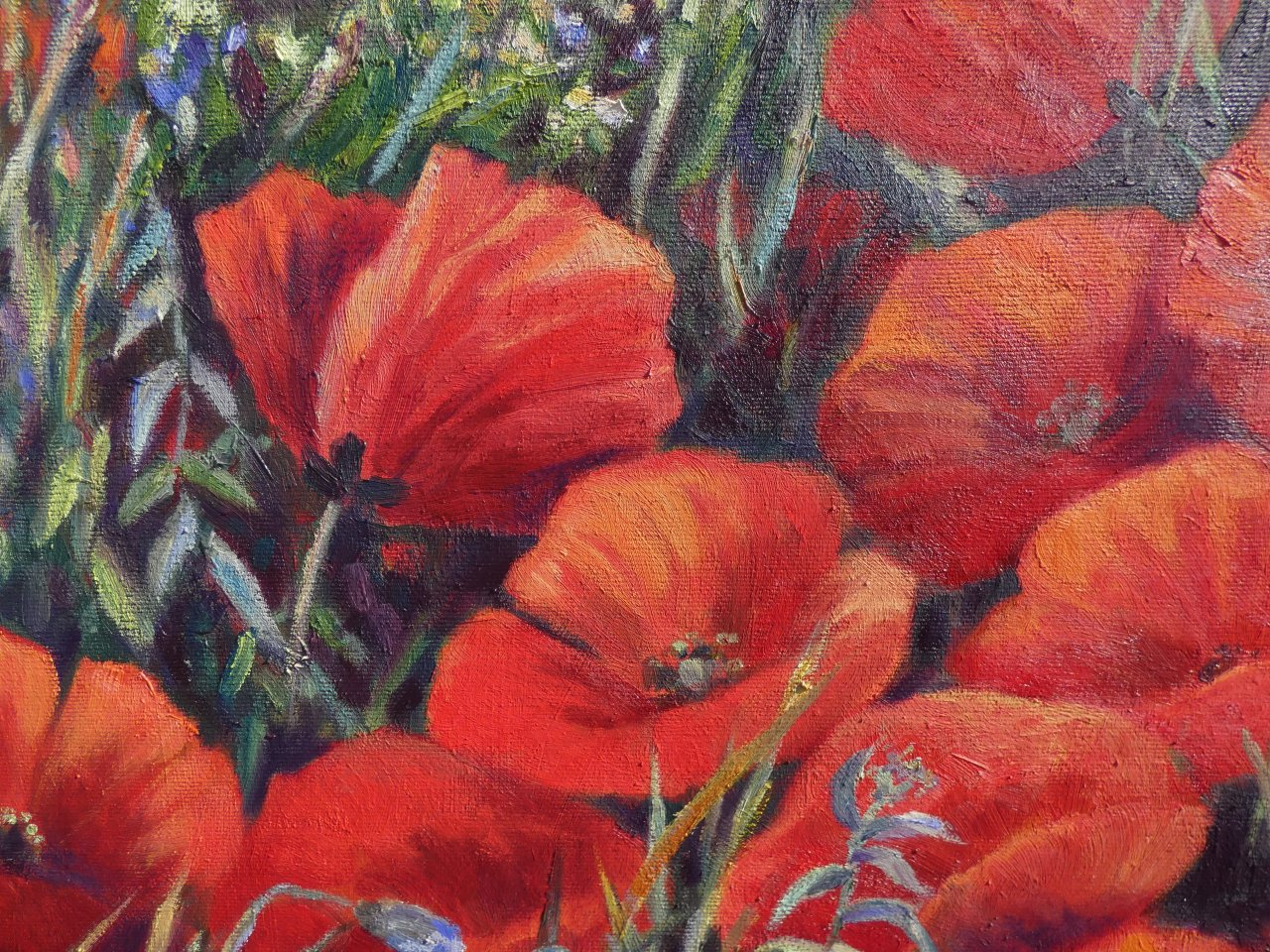 Field detail with red poppies, vibrant colors and energy