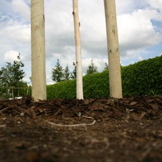 Planting Kit Plus