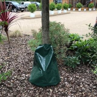 Tree Hydration Bag (Economy)