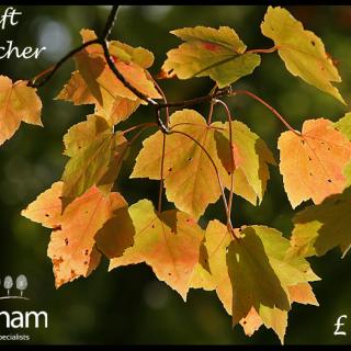 Autumn voucher 1