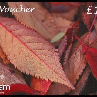 Autumn voucher 2