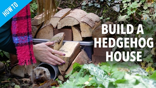 How To Build a Hedgehog House