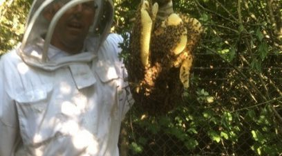 Bee swarm removal in Maidstone, Kent
