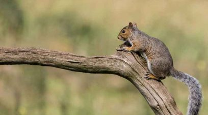 Squirrel on branch | Pest Control Tonbridge