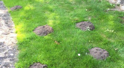 Garden Moles in Maidstone
