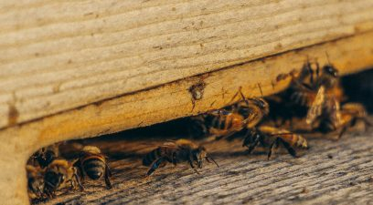 Should I pay for pest control?