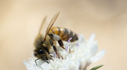 Bee removal homeowners insurance