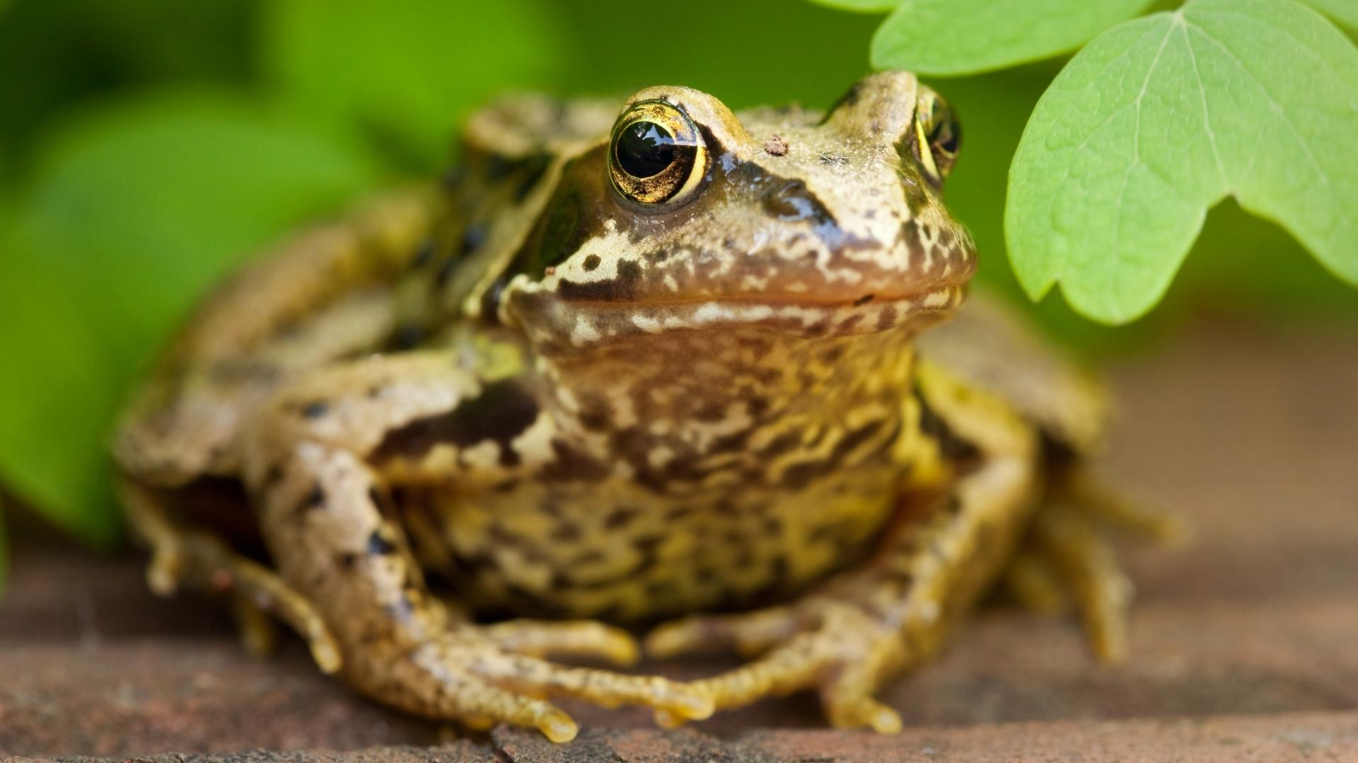 Frog beside river