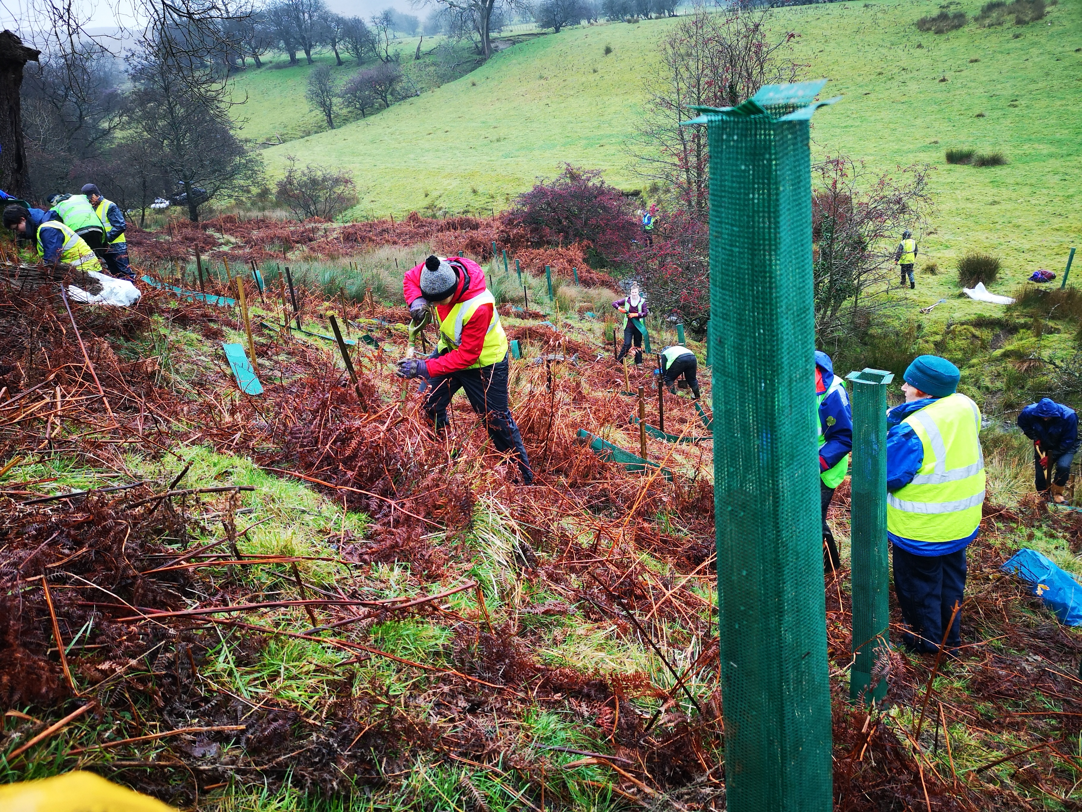 Volunteers planting trees in the Ribble catchment