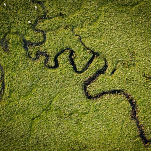 Aerial photograph of a meandering river