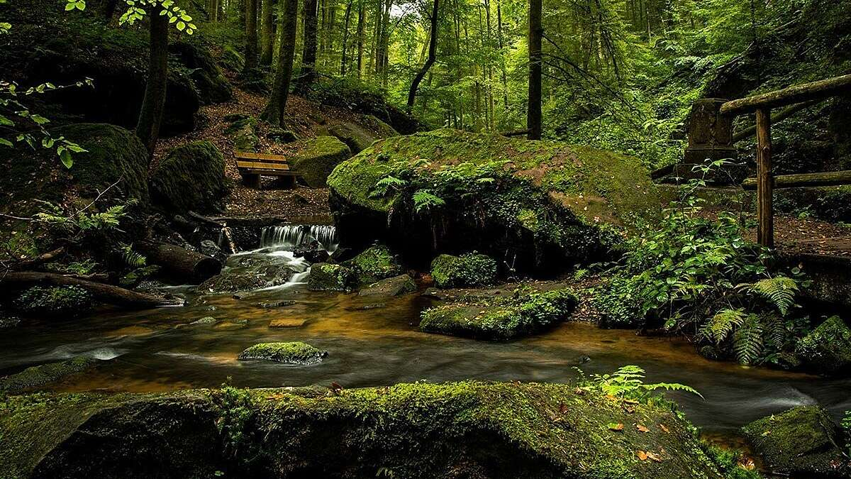 Wooded river