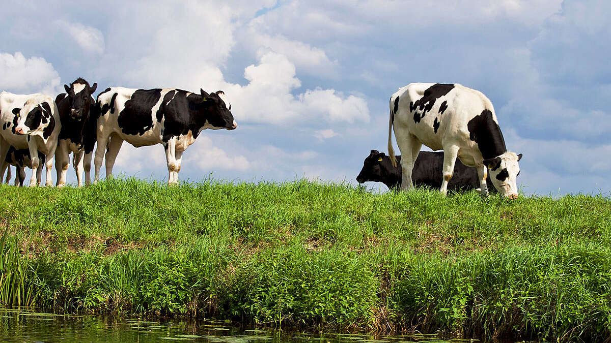 The Rivers Trust and the Catchment Based Approach welcome Defra's new farming rules for water