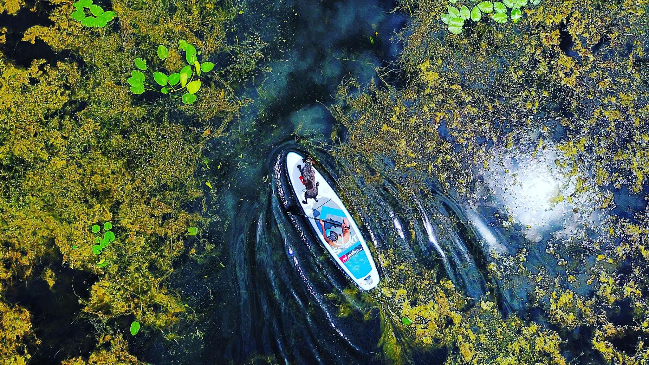 Paddleboarding across a river with a dog, viewed from above