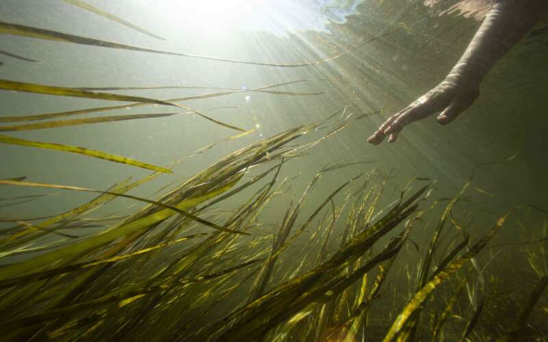 Underwater photo with hand reaching towards reeds in the water