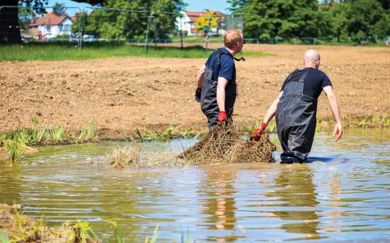 people planting a wetland
