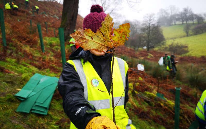 Volunteer holding sapling