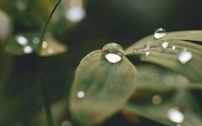 Photo showing water on a leaf