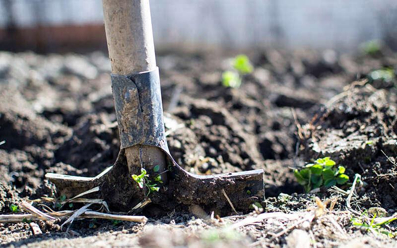 Shovel in soil, used for tree planting