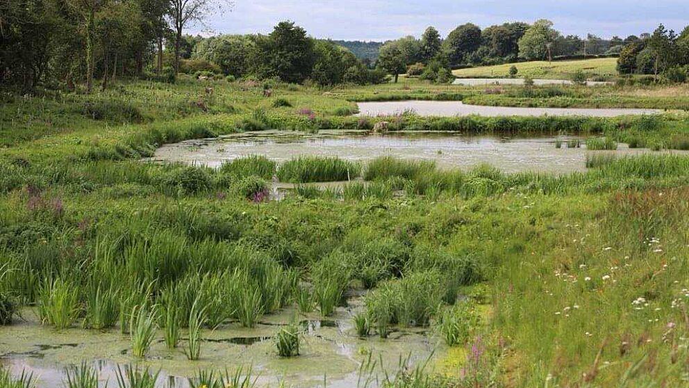 Why we love wetlands