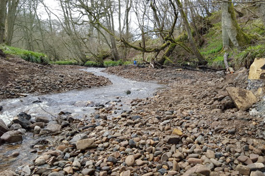 Salmon are spawning along the River Burn in North Yorkshire for the first time in 100 years